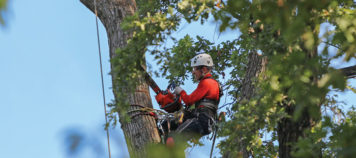 Agronomy – Tree Pruning for the Amateur